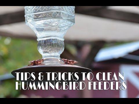 Tips & Tricks To Clean Hummingbird Feeders