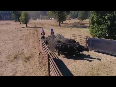 Feather River College Equine and Ranch Management Bachelor Degree