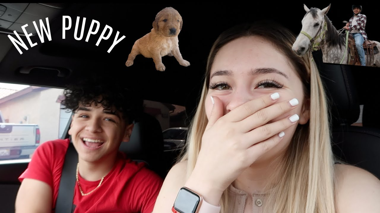 WE ARE GETTING A PUPPY