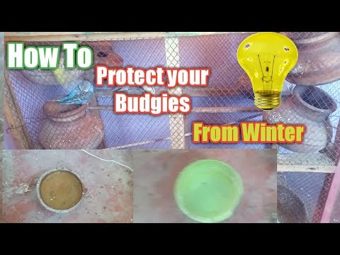 How To Save Your Budgies In Winter Season