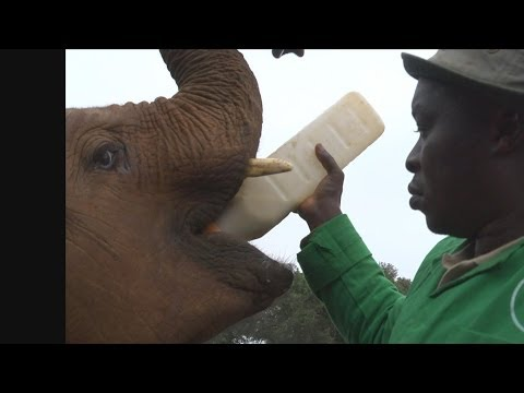Faces of Africa - Walking with Elephants