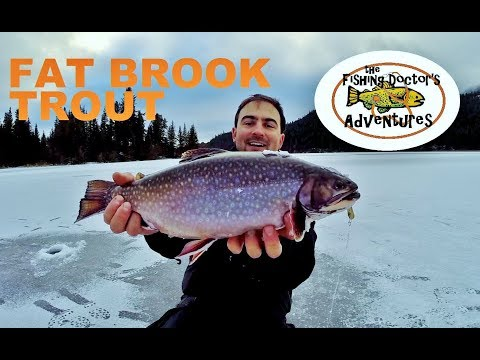 How to Catch Brook Trout Ice fishing
