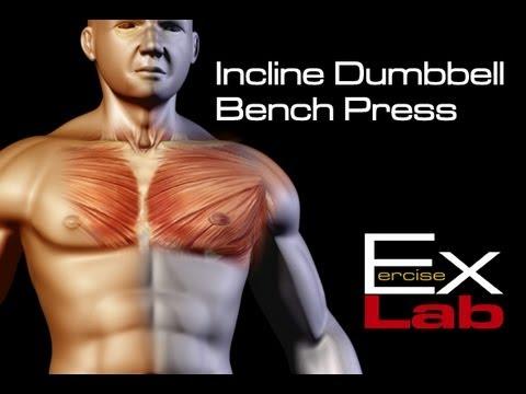 Incline Bench Press ( Dumbbells)  : Chest Exercises