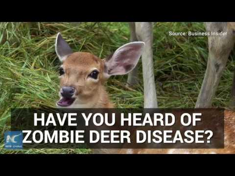 Why 'zombie deer' disease is a concern to researchers