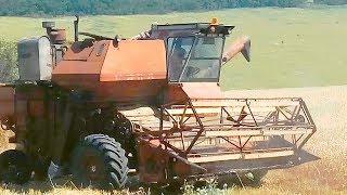 Уборка слабоурожайной пшеницы  Не делайте так! Комбайн Нива СК-5