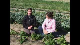Organic Vegetable Production - Soil Borne Pathogens