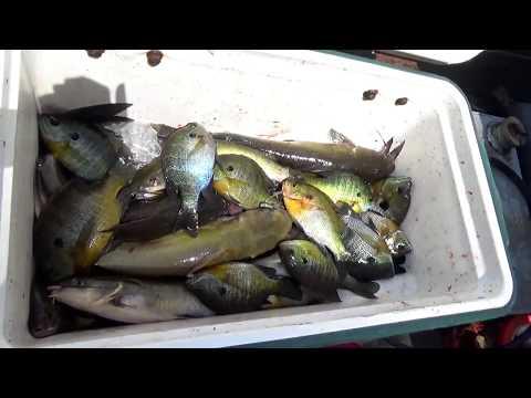 Fishing the River for Bluegill & Catfish!