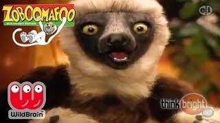Zoboomafoo | Episode: New Zoo Adventure | Animals For Kids