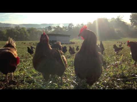 Pastured Penny's Free Range Eggs