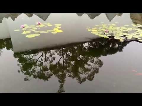 Suzhou Museum Lotus Pond