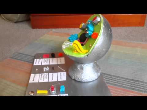 How to make a model of an animal cell