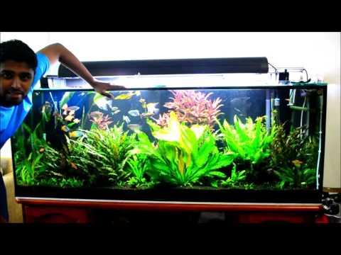 150 Gallon Planted Community Aquarium Update After 9 Months