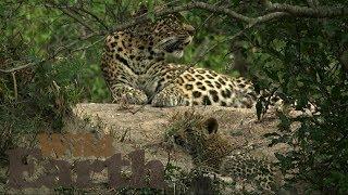WildEarth - Sunrise Safari - 31 May 2020