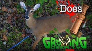 Bow Hunting Whitetails: Back to Back Double Does Down (#412) @GrowingDeer.tv