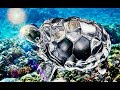 Download How to place crystal tortoise in home and office In Mp4 3Gp Full HD Video