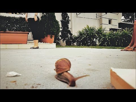 (ASMR, sorta🙉)  CAN YOU STAND WATCHING A SNAIL IN SLOW MOTION?