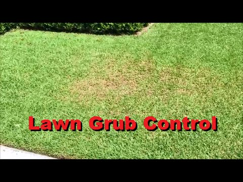 How To Get Rid Of Lawn Grub Worms - [Lawn Grub Control] [Lawn Grubs] [Lawn Grub] [Lawn Grub Worm]