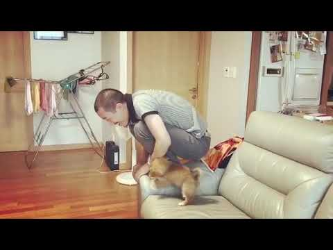 Teaching Puppy to Jump Off Couch