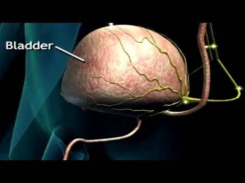 How Do We Pee? Urination Process Animation - Neural Control of Bladder - Micturition Reflex Video