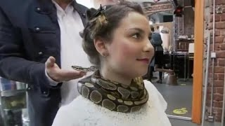 Python gives NECK MASSAGES To Salon Customers    What
