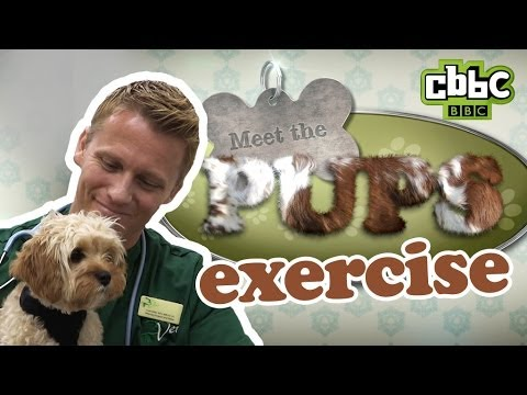CBBC: Meet The Pups - How to Exercise Your Puppy