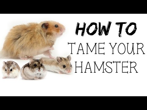 HOW TO TAME YOUR HAMSTER!