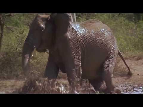 Stop Elephant Poaching