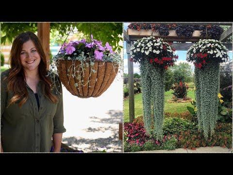 The Hanging Basket Jellyfish Challenge // Garden Answer