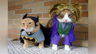 Hilarious PETS IN COSTUMES will make you LAUGH!