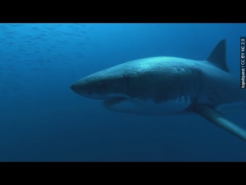 Three Possible Shark Sightings Reported In Maine