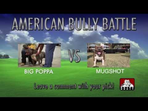 AMERICAN BULLY BATTLE - BIG POPPA vs. MUGSHOT