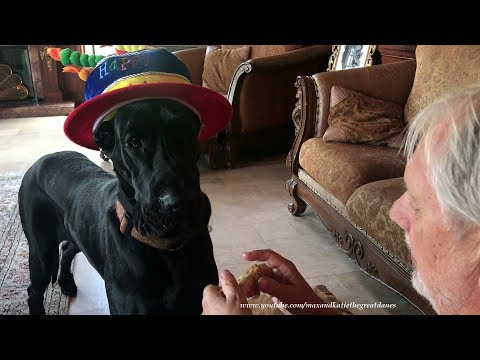 Birthday Hat and Chicken Wings ~ Max and Katie the Great Dane's Family Tradition