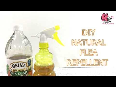 DIY FLEA REPELLENT (WITH APPLE CIDER VINEGAR)