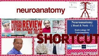 Neuroanatomy online lectures Videos - votube net
