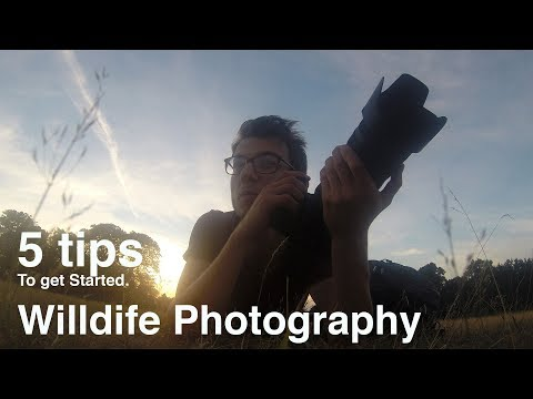 Wildlife Photography - 5 Tips to get started!