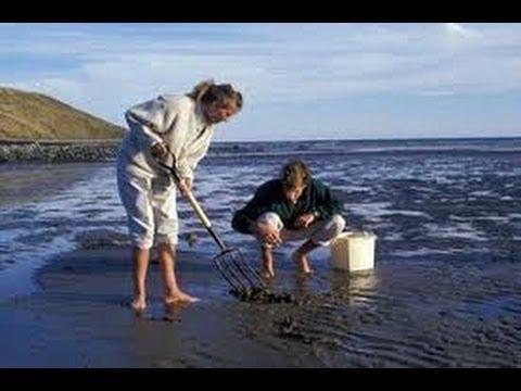 Clam Digging in Nova Scotia  - Best Day Out!