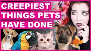 Creepiest Things Pets Have Done