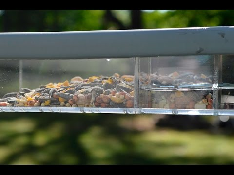 New! Large Window Feeder