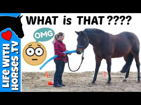 How To Introduce NEW and SCARY Things to Your Horse | DESENSITIZING a SENSITIVE or SPOOKY Horse