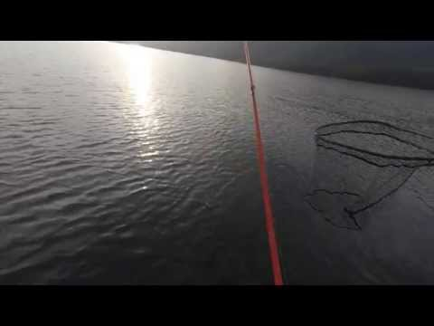 Monster Topwater Muskie Lost At Boat