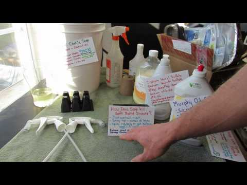 Home Garden Sprays/Remedies Series: Soapy Water Spray for Soft Bodied Insects - TRG 2015