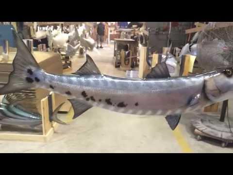 360 degree view Barracuda fishmount
