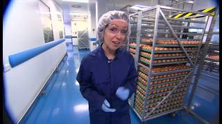 BBC News: Major UK investment to boost influenza vaccine production, jobs and exports