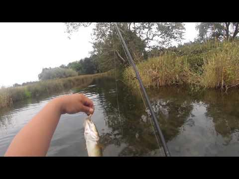 pikeminnow and crawfishing