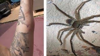 Download I Got Bitten By A Deadly Spider In Thailand?!? Video