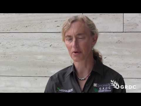 Sarita Bennett, CCDM: Be aware of sclerotinia risk and careful after canola | GRDC Updates| Western