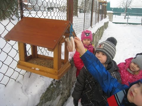 We help the birds to survive during winter season