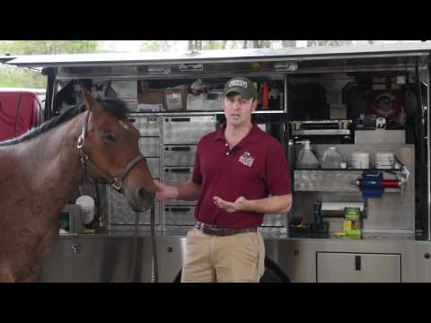 Ticks - Prevention and Defense For Your Horse