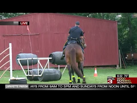 A look at the Lafayette Police Department's mounted patrol (pt 2)