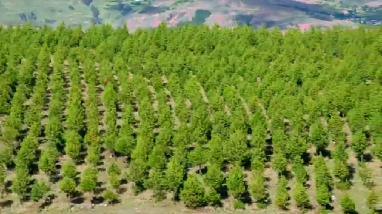 La Forestación,  Una Contribución al Desarrollo de la Provincia de Quispicanchi